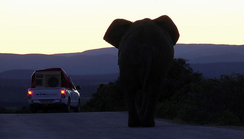 Geduldig wie ein Elefant